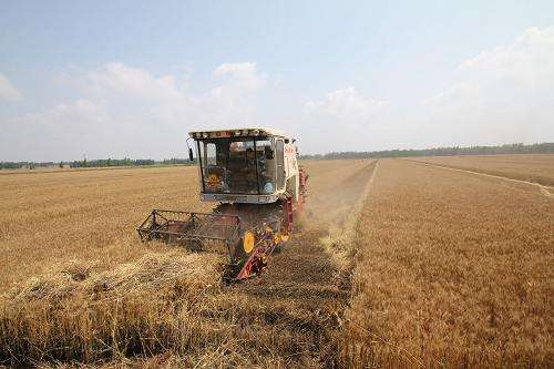 National wheat harvest more than half