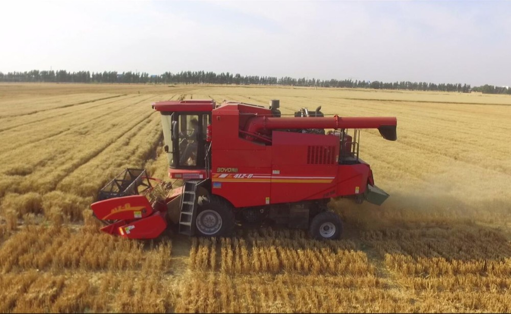 The machine harvest yield of Xinjiang wheat reaches 97.48%